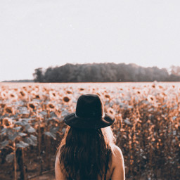 freetoedit sunflowerfield sunflowers fltr 90sfltrs