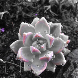 photography flowerpower colorpop