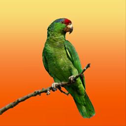 art parrot minimal orange green freetoedit