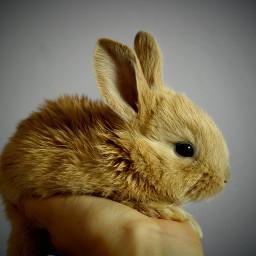 rabbit bunny rabits animal animals freetoedit