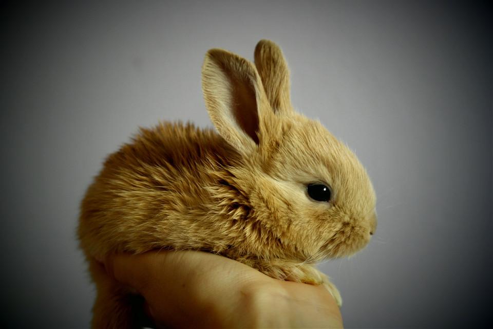 Let you imagination take over. Pexels (Public Domain) #rabbit #bunny #rabits #animal #animals #freetoedit
