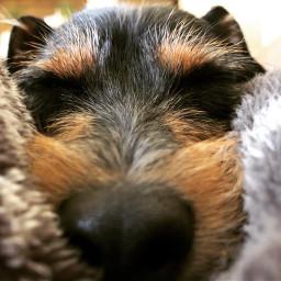 freetoedit fostering fosterdog dog dogs