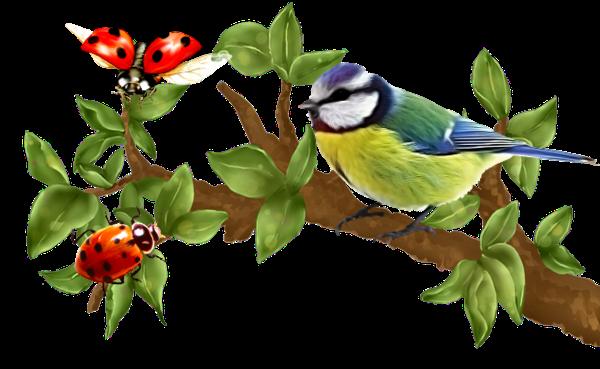 #ftestickers#bird#ladybugs