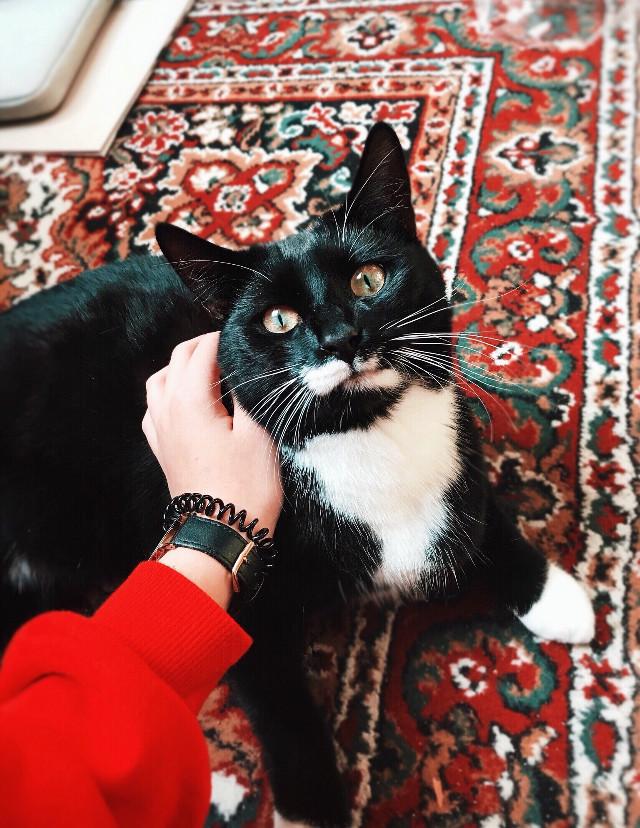 #cat #catsofpicsart #cateyes #pet #petsandanimals #petlove #catlove #eyes #rainyday #autumn #autumncolors