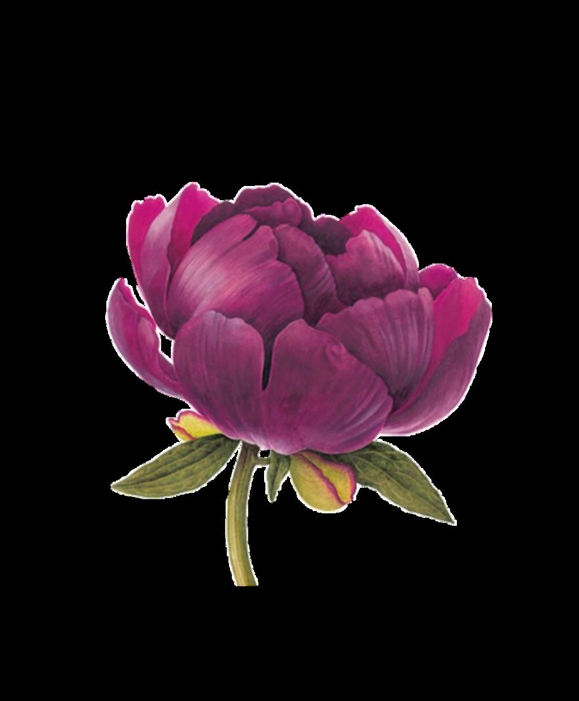 #tumblr #spring #vintage #flower #flowers #flowerart #tumblrstickers #tumblrflowers #tumblrflower #tumblrpng #tumblrspring #edit#kpopedit #edits
