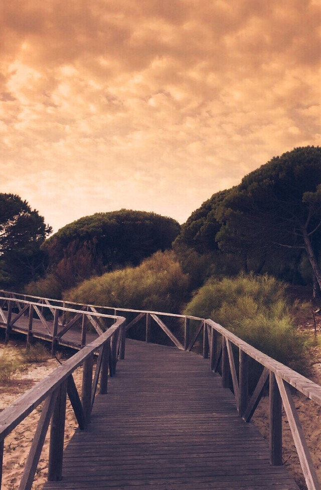 Wish all of you a wonderful new week 🧡                                         #freetoedit  #woodenpathtothebeach #endoftheday #warmweather #goldenhour #sunsettime #beachsand #bushesandtrees #pinetrees #skyandclouds #beautifulwarmgoldenlight #beautifulscenery #peacefulandandquietmoments #emotions #sunsetphotography