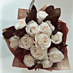 freetoedit whiteroses ivoryeffect