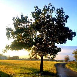 peace stillness nature morning freetoedit