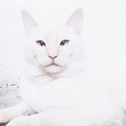 cat pale white vsco fotoedit