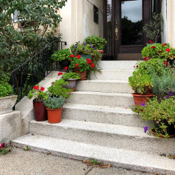 freetoedit plants stairs colorful florals