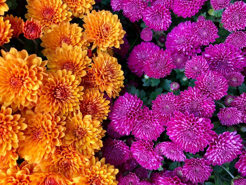 #freetoedit #nofilter  #floralbackgrounds #floralpattern #floralcanvas #fallcolors #twocolors