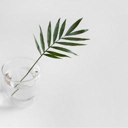 minimal minimalism background backgrounds leaves freetoedit