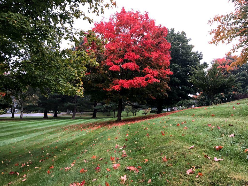 #freetoedit #fall ##nature #rain