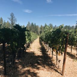 napavalley vineyards