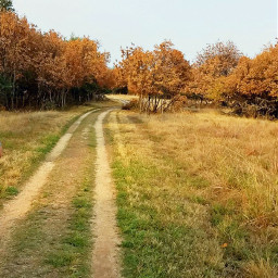 freetoedit nature outdoors dirtroad