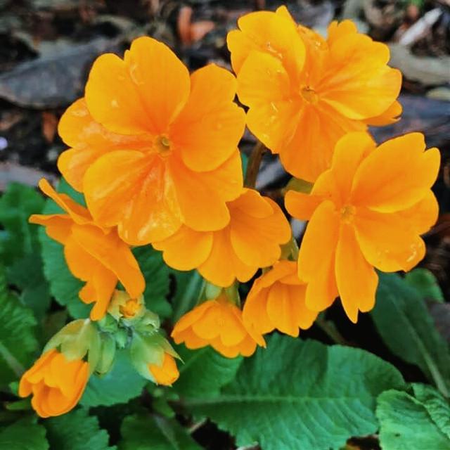 #flowers #background #fltr #naturephotography  #freetoedit