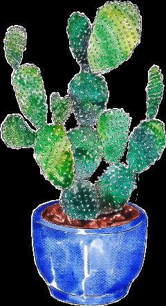 cactus drawing painting freetoedit