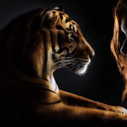 freetoedit tiger girl woman silhoutte
