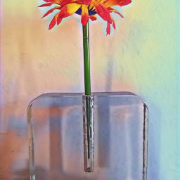picoftheday flower flowerphotography betheone fiore