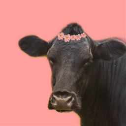 cow cutout sticker coral flowers