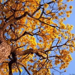 amarelolindo pcgoldenyellow goldenyellow