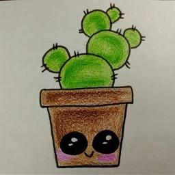 dccactus cactus