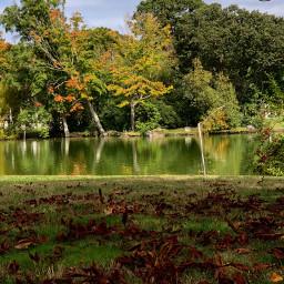 pcgoldenyellow goldenyellow fallcolors reflection nature freetoedit