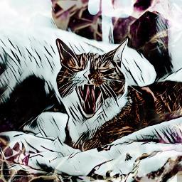 freetoedit ircglobalcatday globalcatday cat cats