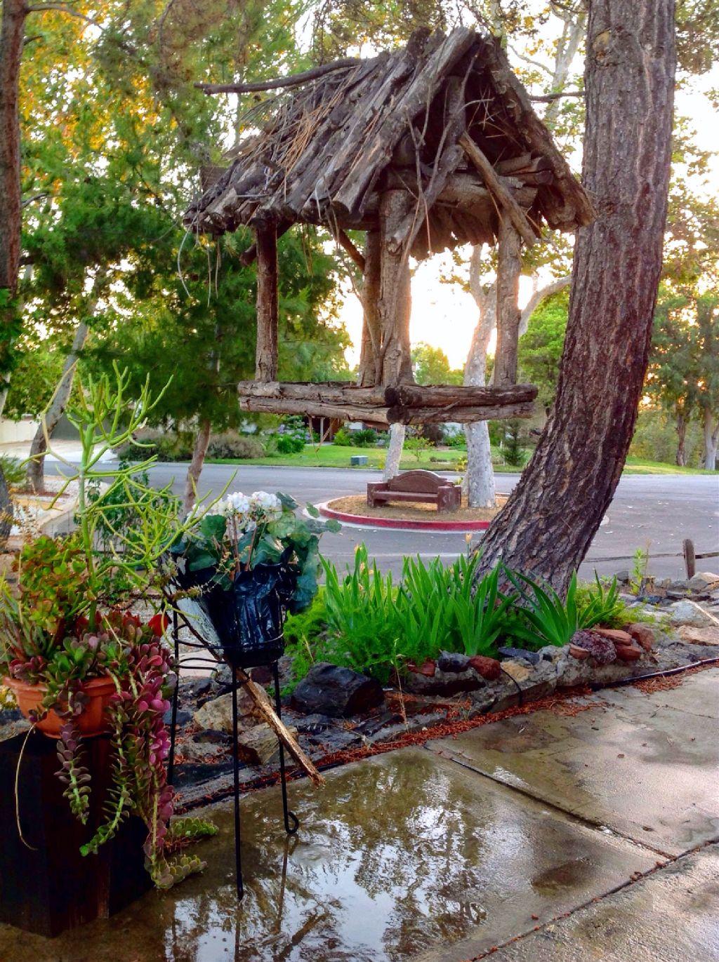 puddle puddles water wet birdhouse house sunset sticks