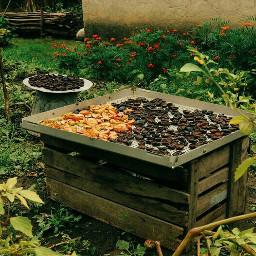 dryfruits preparingforwinnter countryside autumnpreparations