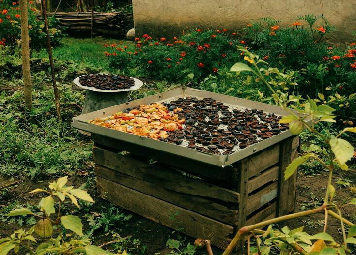 🍎🍐🍑 #dryfruits #preparingforwinnter #countryside #autumnpreparations