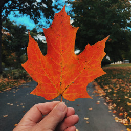 freetoedit leaf inmyhand fallcolors