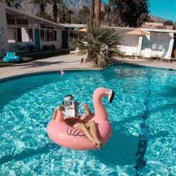 palmsprings themonkeytreehotel travel pool flamingo freetoedit