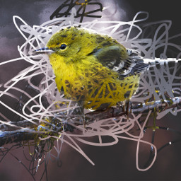 bird madewithpicsart digitaldoodle abstract