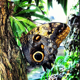 pcbugsandinsects bugsandinsects picsart butterfly starrynights27