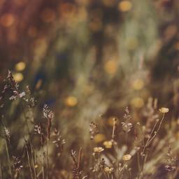 freetoedit nature wildplants warmsunnylight fallcolors