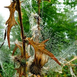 freetoedit naturepatterns myphoto naturephotography