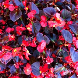 freetoedit florals floralcanvas fall filltheframe
