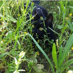 photooftheday cats blackcat lilu starrynights27 pcphotooftheday