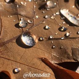 interesting nature macro raindrops oakleaf myplace nofilter noedit iphone norway