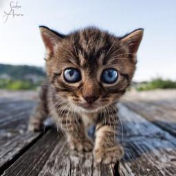 babycat cat cute animals ilikethispicture freetoedit