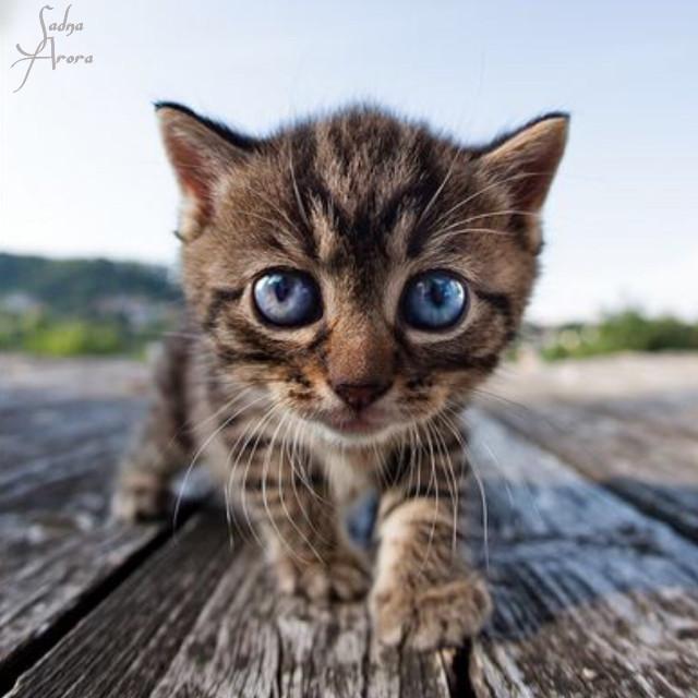 #babycat #cat #cute by @sadna2018 #animals #ilikethispicture #freetoedit