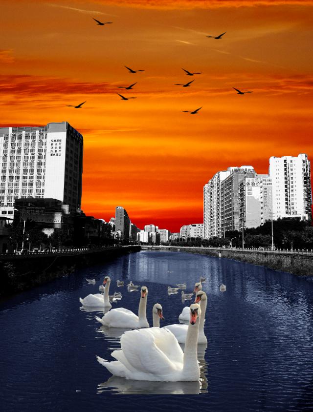 #freetoedit #blackandwhite #colouring #coloring #colorize #scene #city #beautiful #sky #water #buildings #scenery #birds