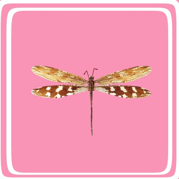 #insetos #freetoedit #edit #edited #png #nature #natureza #collage #colorful #cool #color #insect #scinsects #insects #stickers #sticker #adesivo #desafio