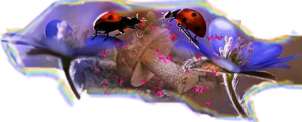freetoedit scinsects insects