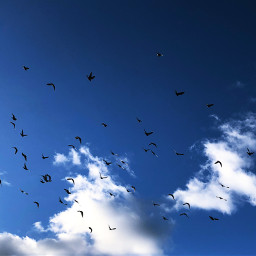 freetoedit flockofbirds sky lookup