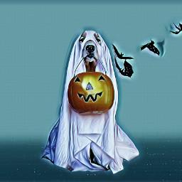 spookydog spooky dog halloween freetoedit