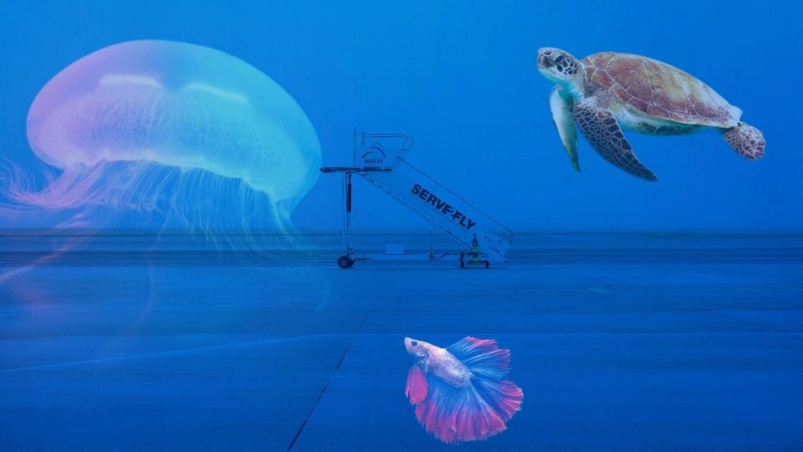 #airport #jellyfish #turtle #fish
