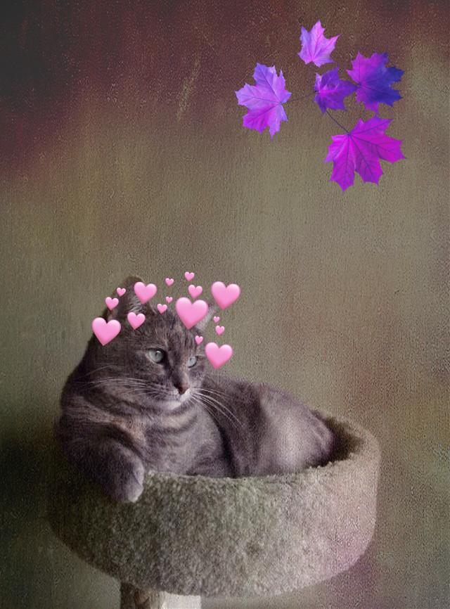 #cat#animals#art