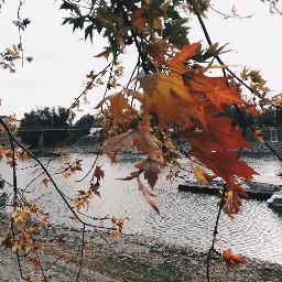 autumn baja hungary colorful leaves